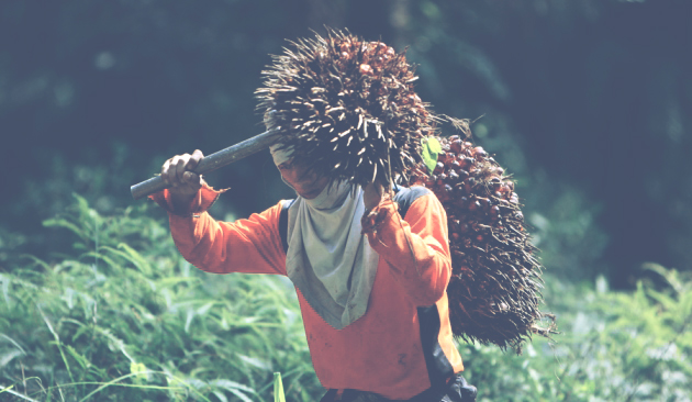 shifting to oil palm article