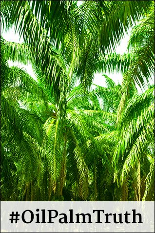 Want the truth? Read the latest Oil Palm Truth blog post