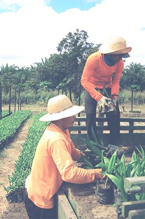 Le Conseil Malaisien de l'Huile de Palme demande au Président Hollande d'abandonner la taxe discriminatoire sur l'huile de palme