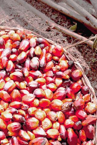 Le Chemin vers l'Huile de Palme Malaisienne: Chef Gerhard Albrecht – Utiliser la bonne huile de cuisson